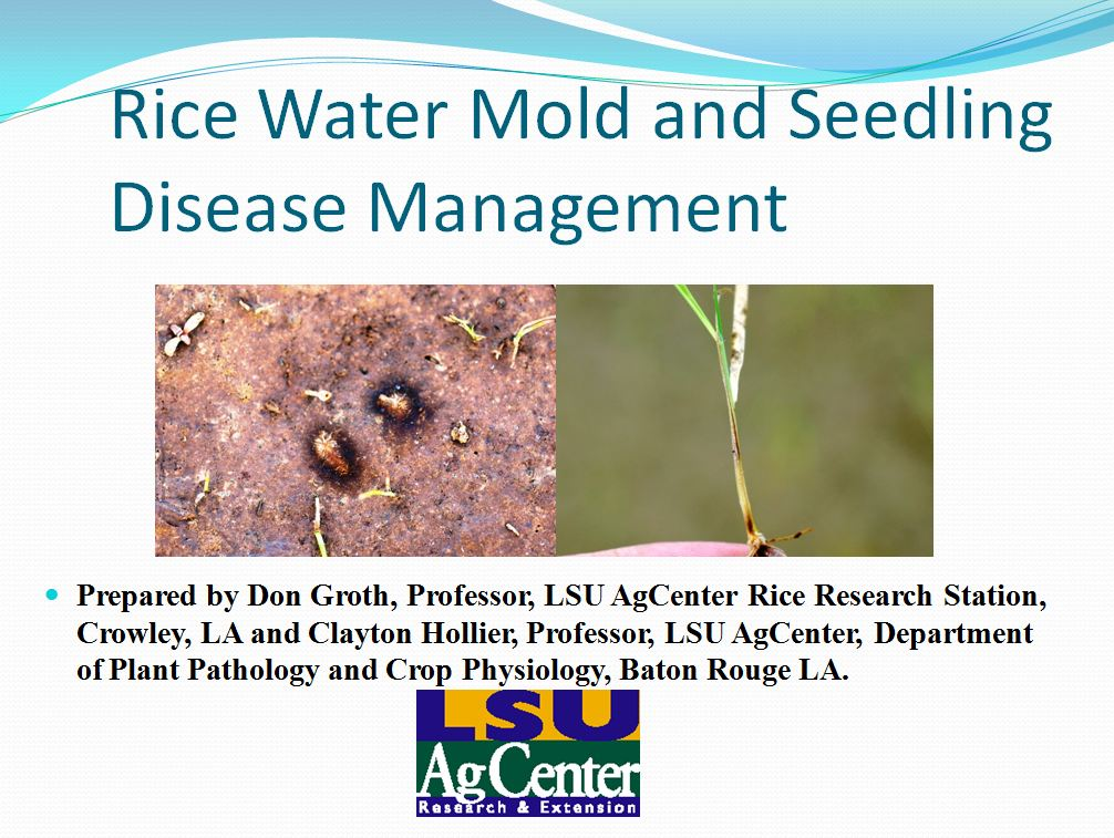 Rice Water Mold and Seedling Disease Management 2013