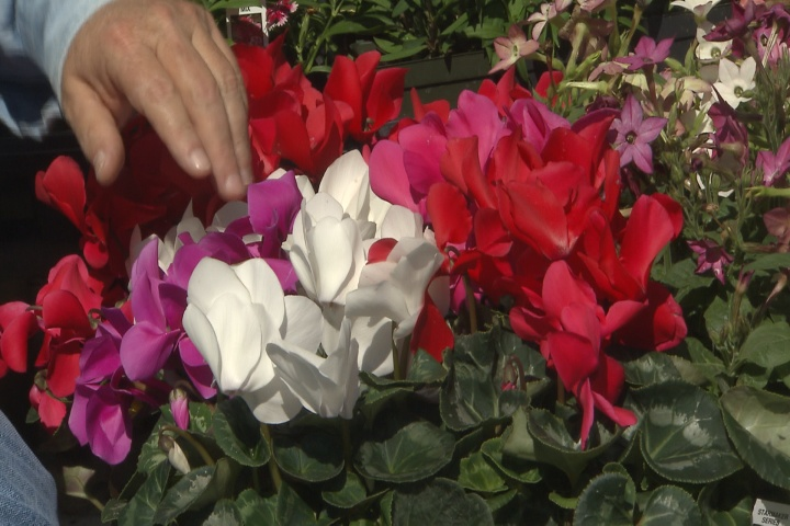 Cool-season shade plants offer nice colors