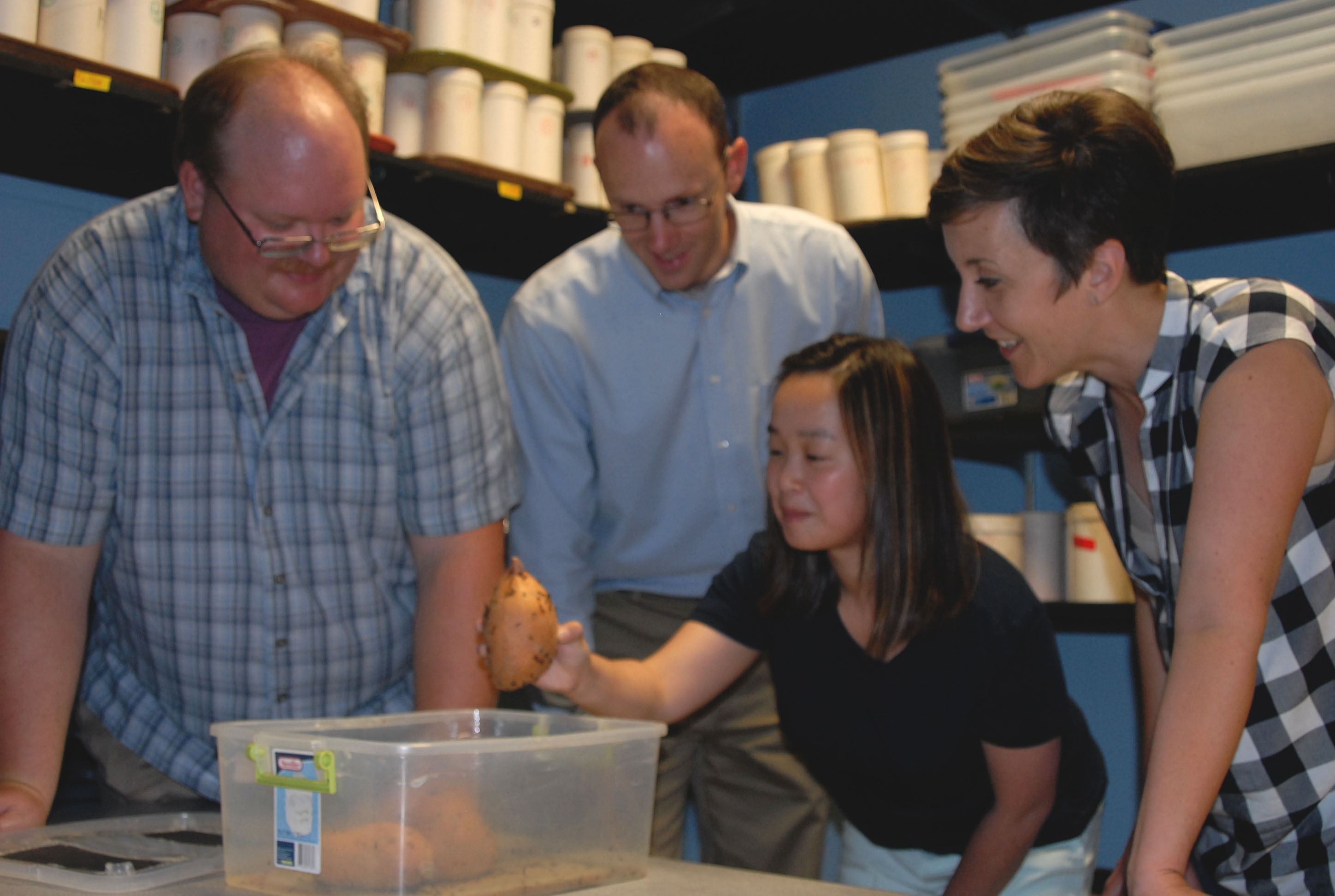 LSU AgCenter researchers team up with N.C. company to find control for sweetpotato weevils