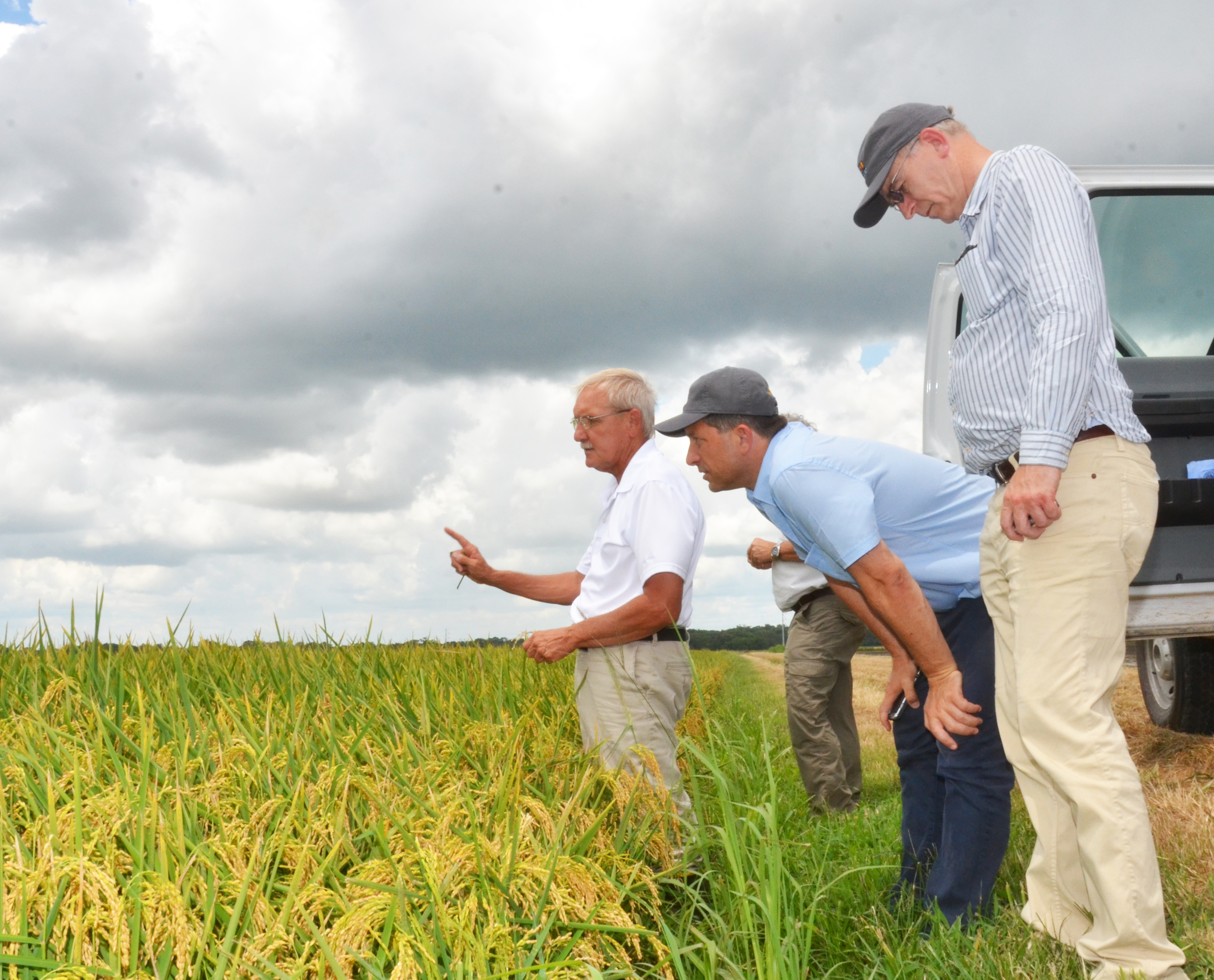 Rice research benefits from international exchanges