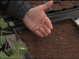 Use Seeds To Get Warm-season Bedding Plants Going