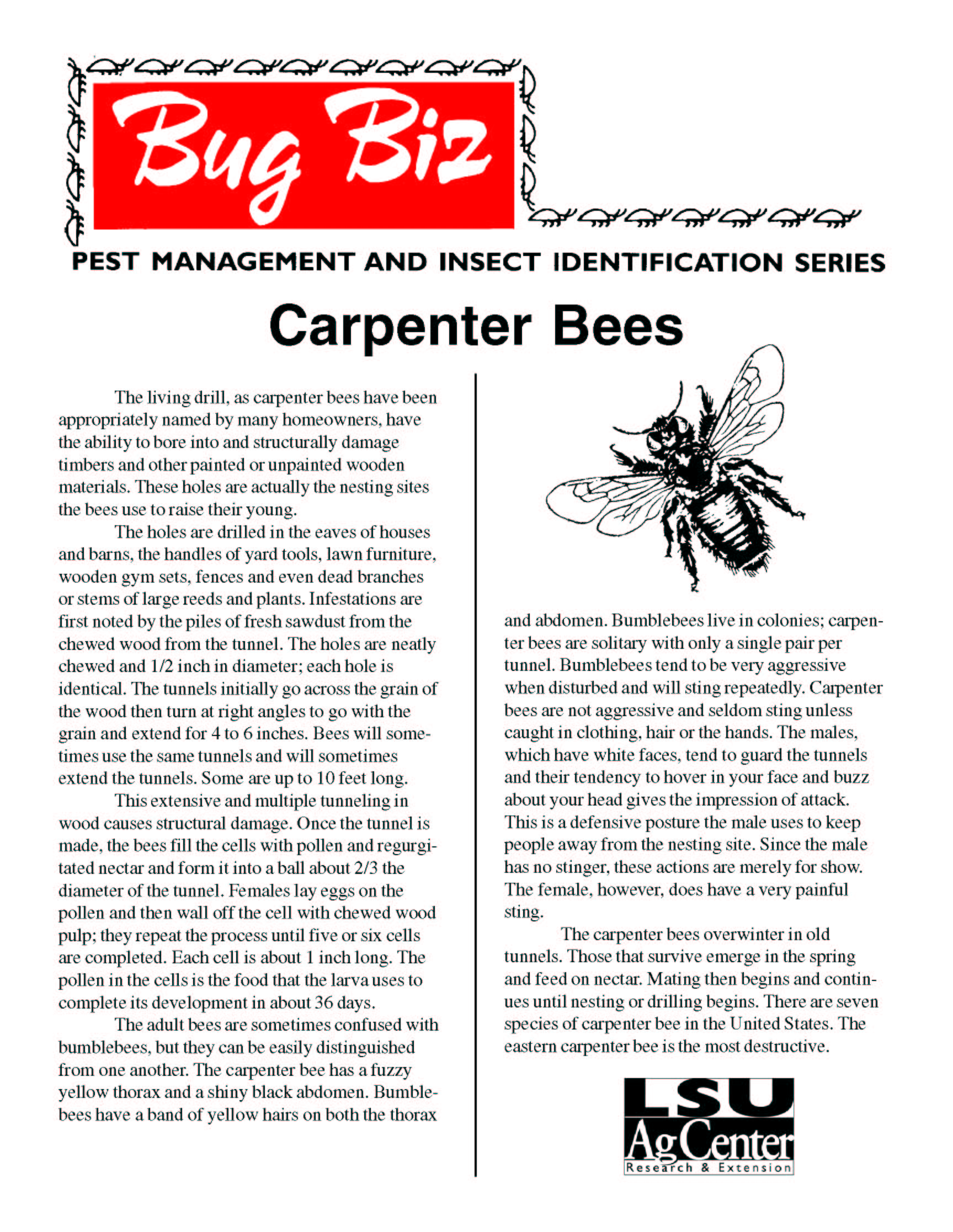 Bug Biz: Carpenter Bees