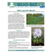 Bug Biz: Water Hyacinth Weevils