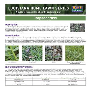 Louisiana Home Lawn Series: Torpedograss
