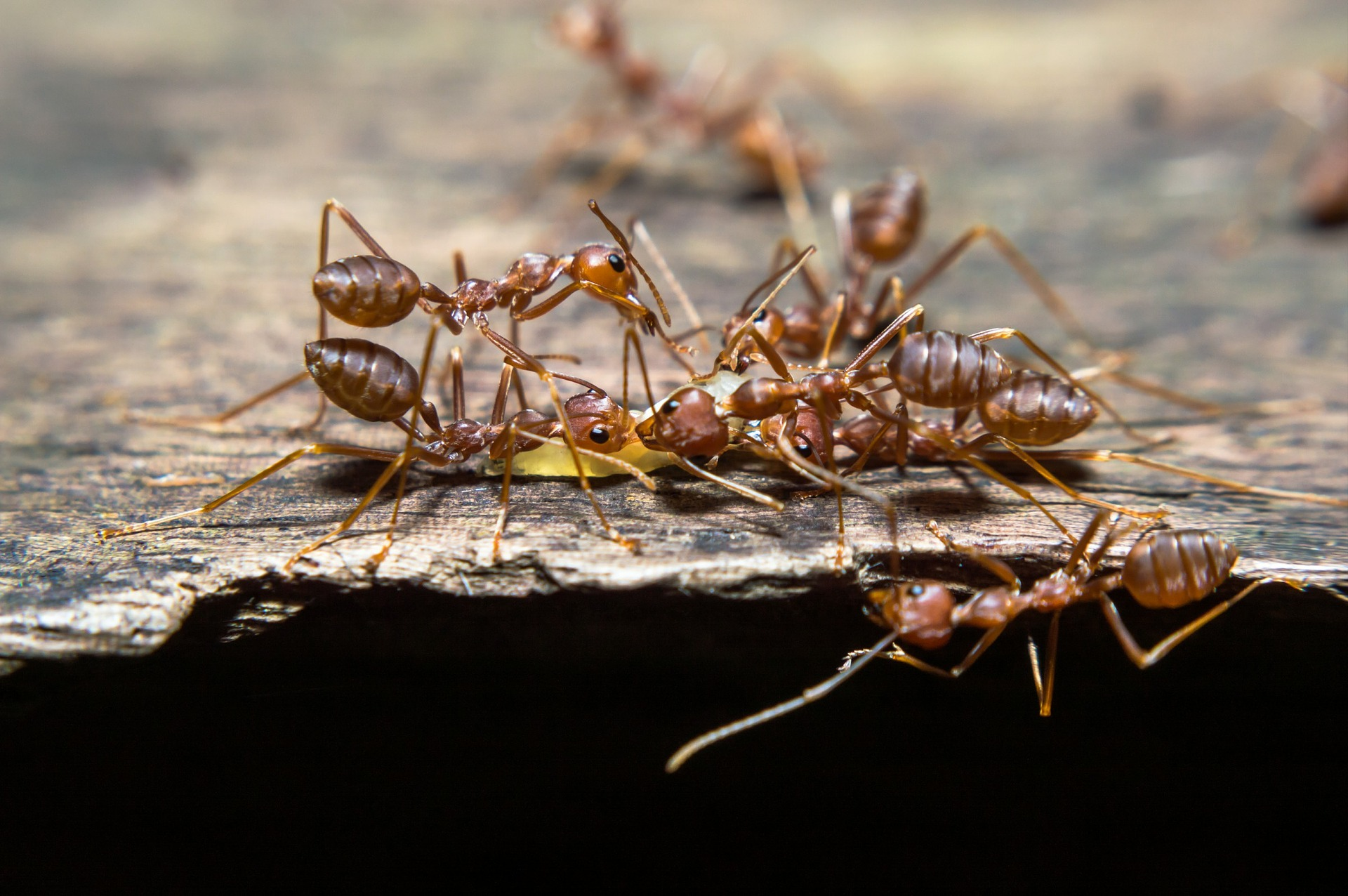 ​Controlling Fire Ants