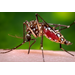 Insect-borne diseases rising