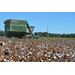 Outstanding cotton harvest could break yield-per-acre record