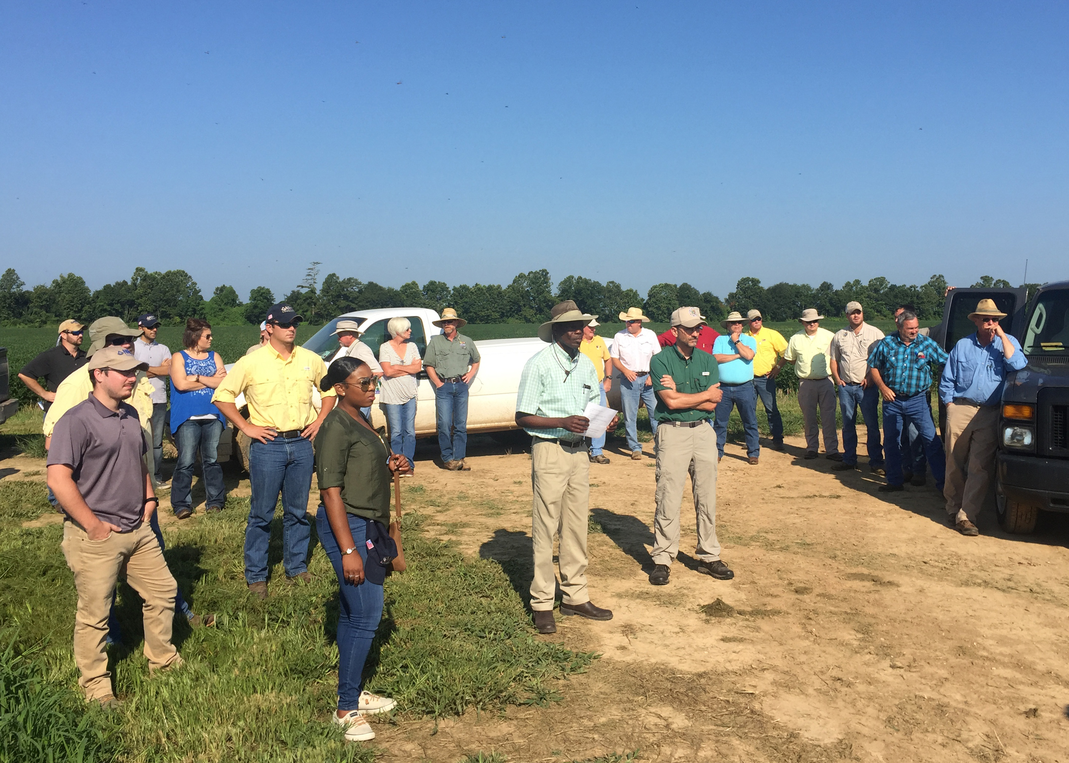 Row rice, nematodes featured at field tour