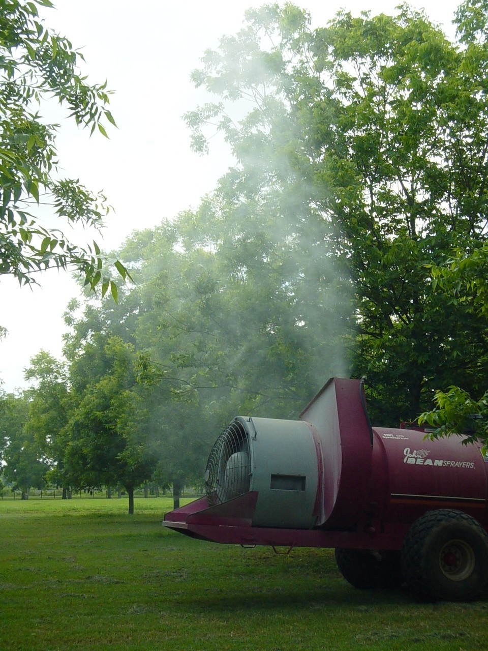 Fungicide Application Recommendations for Pecan Disease Control