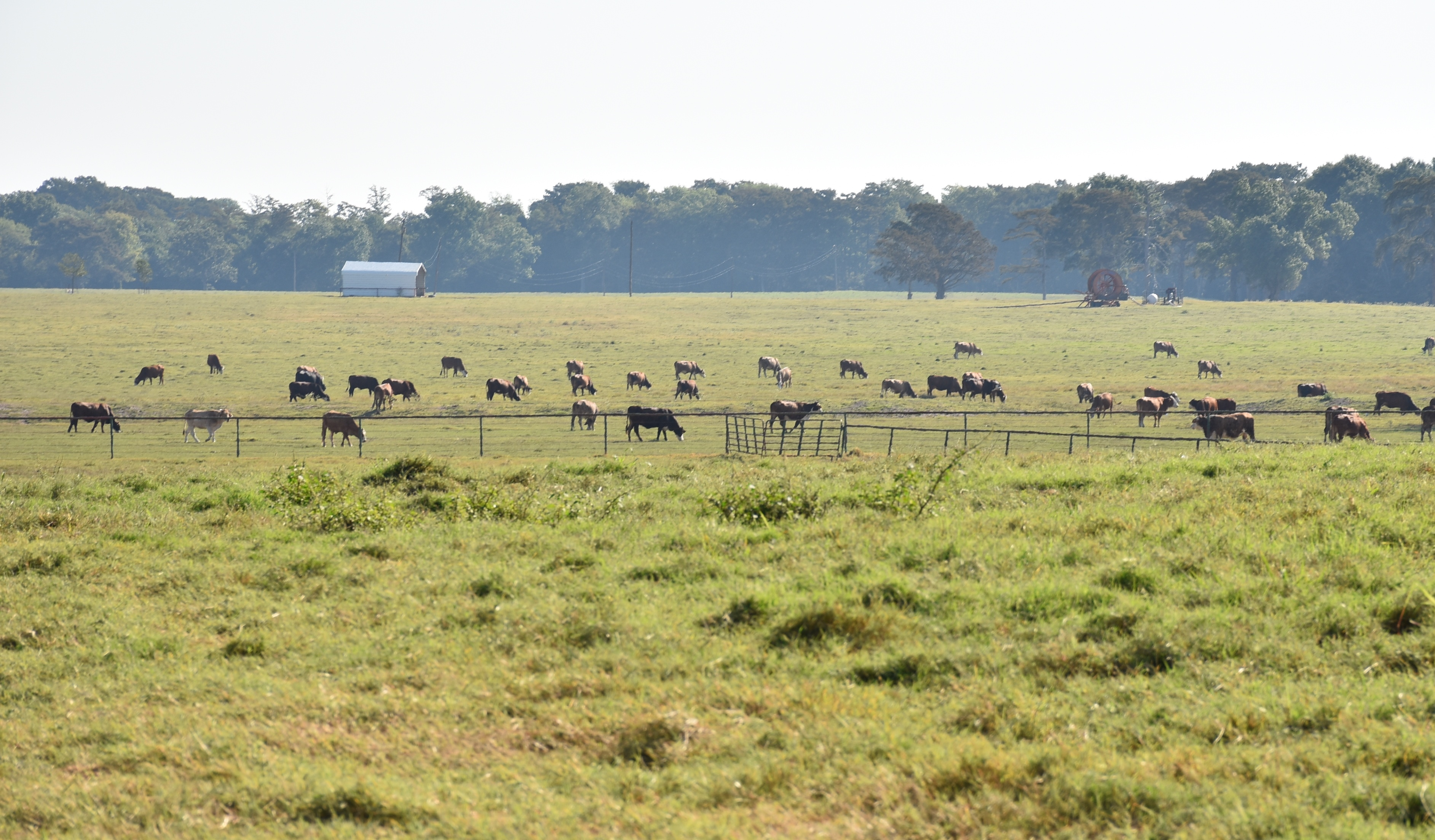 Herd, pasture improvement focus of upcoming beef field day