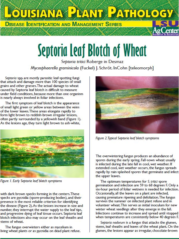 Septoria Leaf Blotch of Wheat
