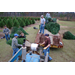 Choosing Christmas tree can be fun family event
