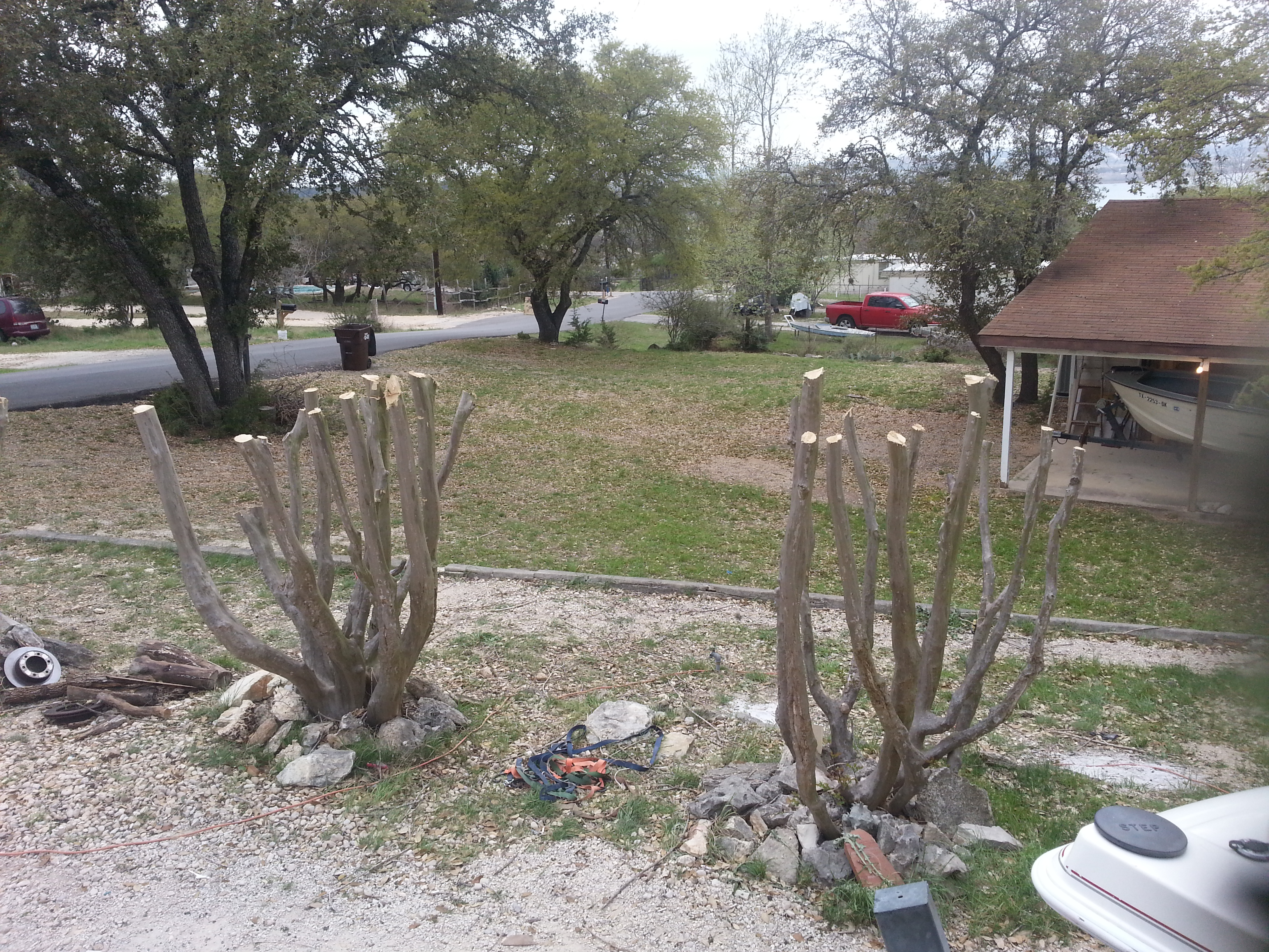 Prune crape myrtles properly