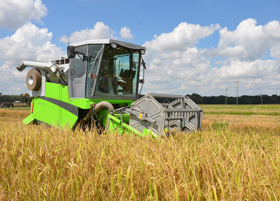A research combine harvests rice on a date-of-planting study at the Rice Research Station near Crowl