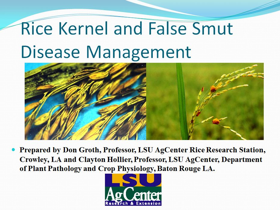 Rice Kernel and False Smut Disease Management 2012