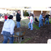 National Collegiate 4-H Members Volunteer In St. Bernard