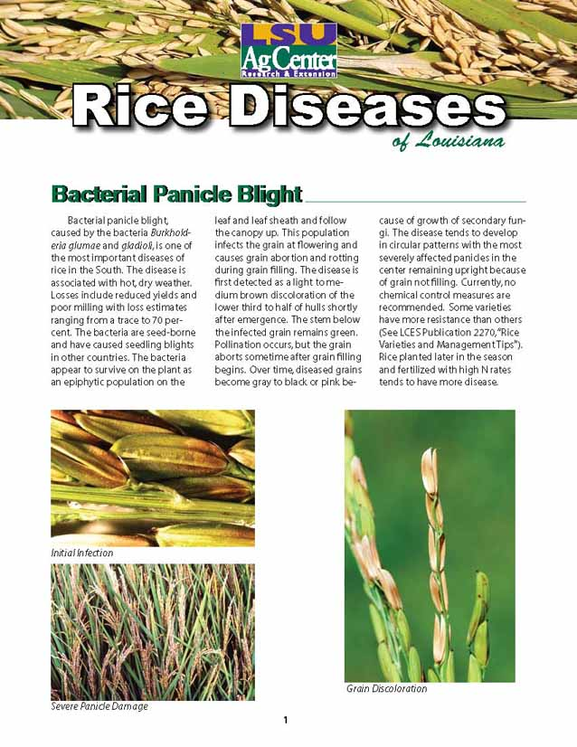 Rice Diseases of Louisiana