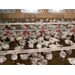 Poultry, livestock producers face economic challenges