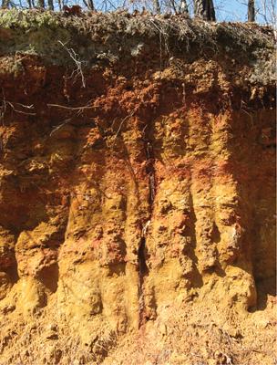 color of alluvial soil
