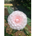 Camellias are wonderful for winter flowers