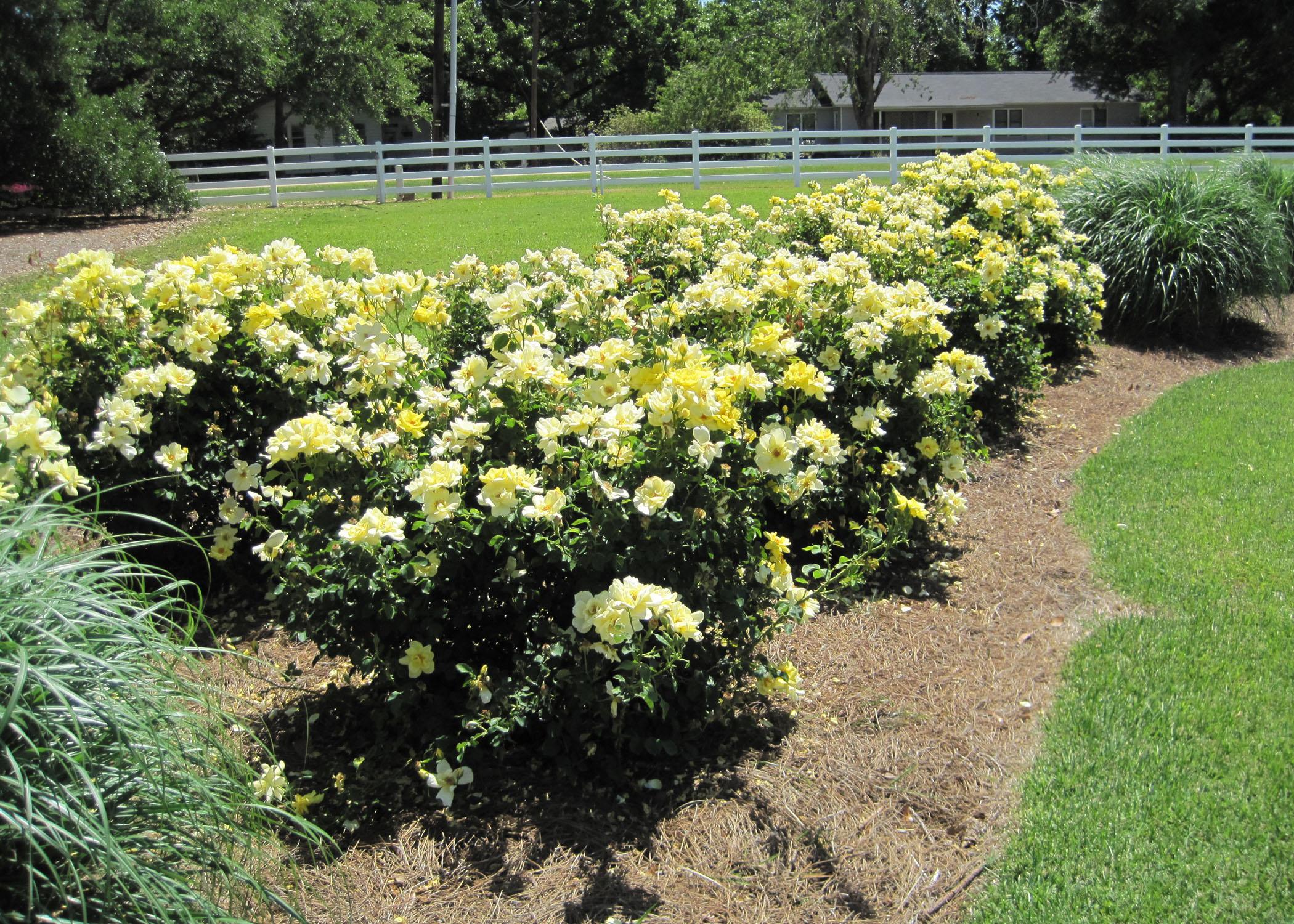 Prepare properly prior to planting