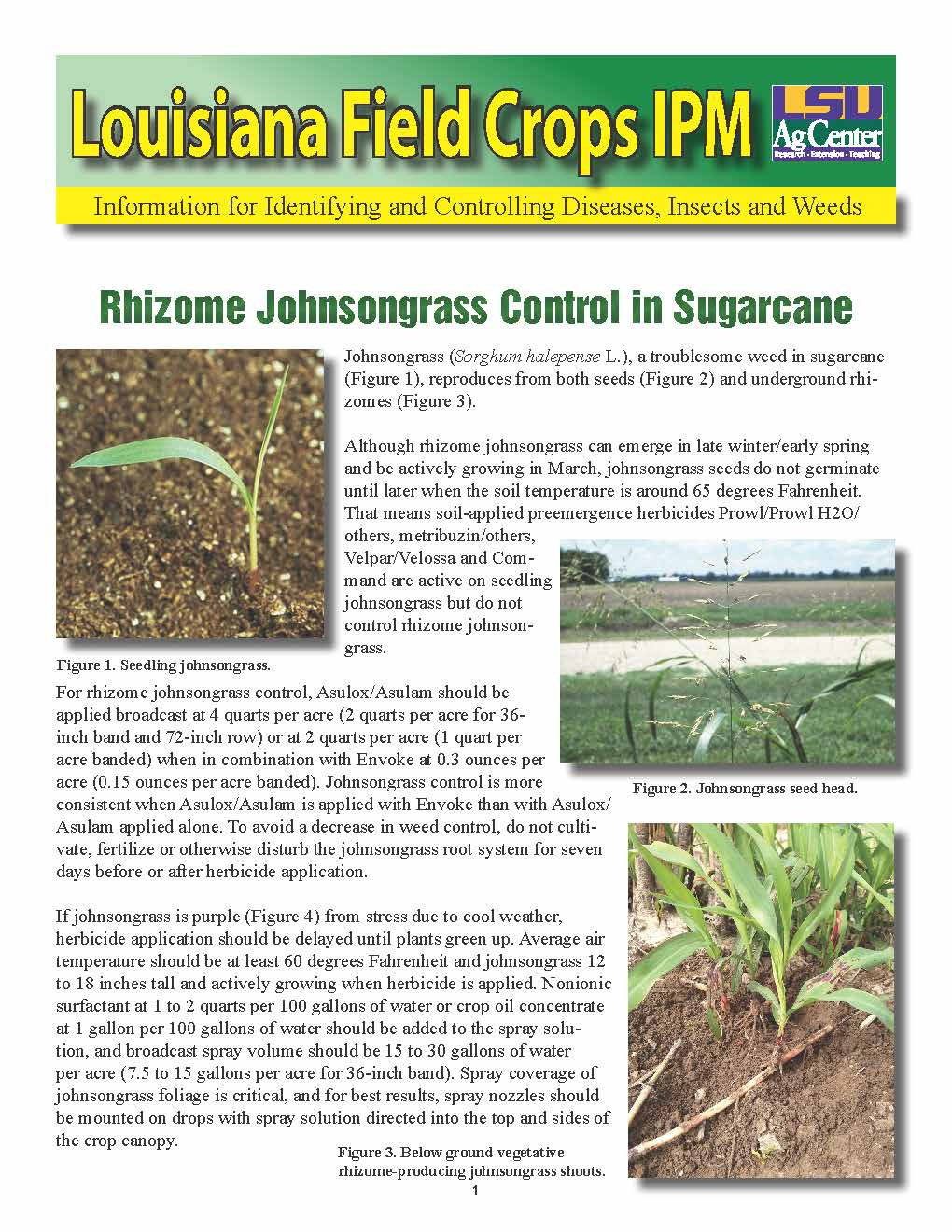 Rhizome Johnsongrass Control in Sugarcane