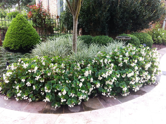 Colorful Bedding Plants Bring Shady Landscapes To Life