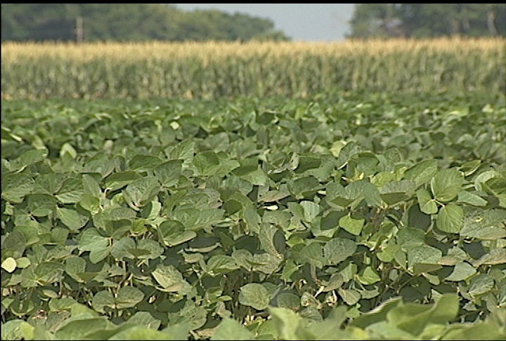 Dry weather starts to hurt crops