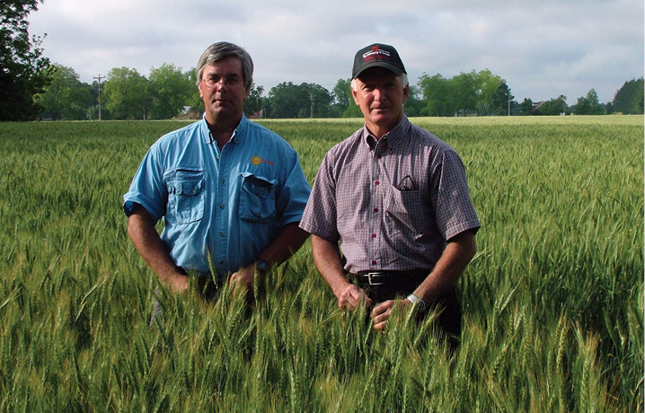 Steve Harrison and University of Georgia wheat breeder Jerry Johnson