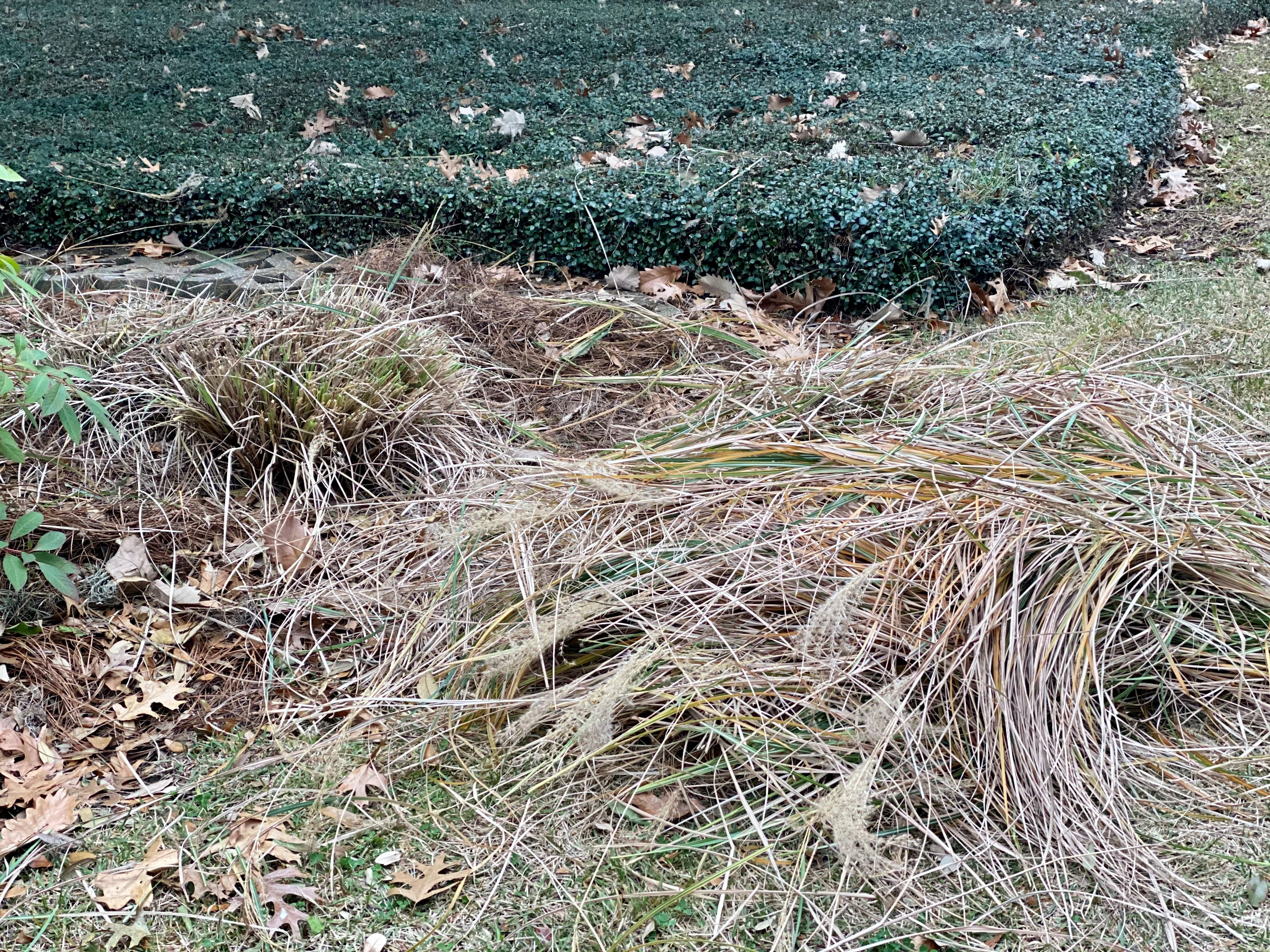 Dormant ornamental grasses can be trimmed in wintertime but make great food and nesting areas for birds.