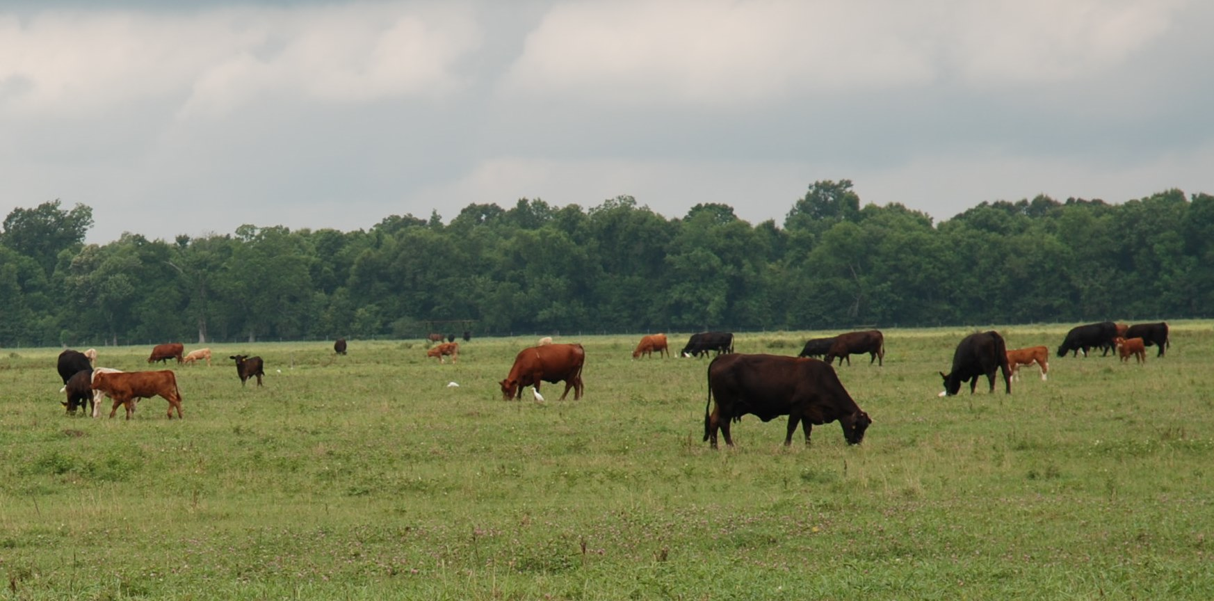 Pasture management, bull selection focus of upcoming beef field day