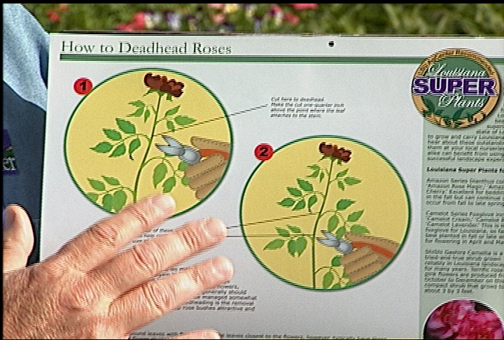 Calendar offers great tips for Louisiana gardeners