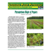 Louisiana Plant Pathology:  Phytophthora Blight of Peppers