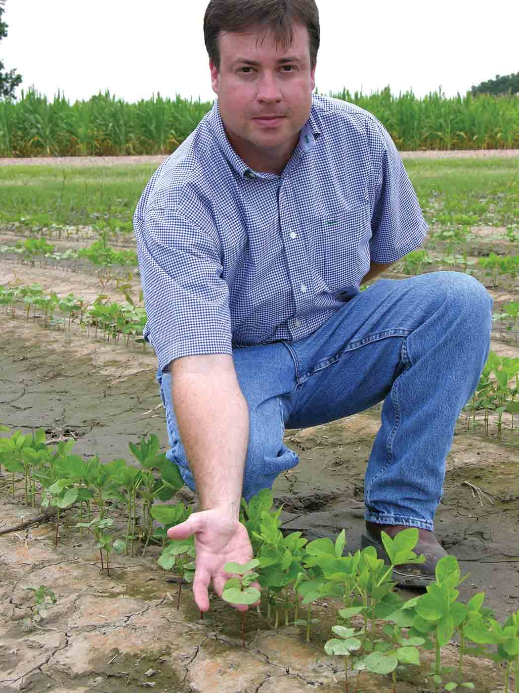 When Crops Become Weeds: Control Strategies