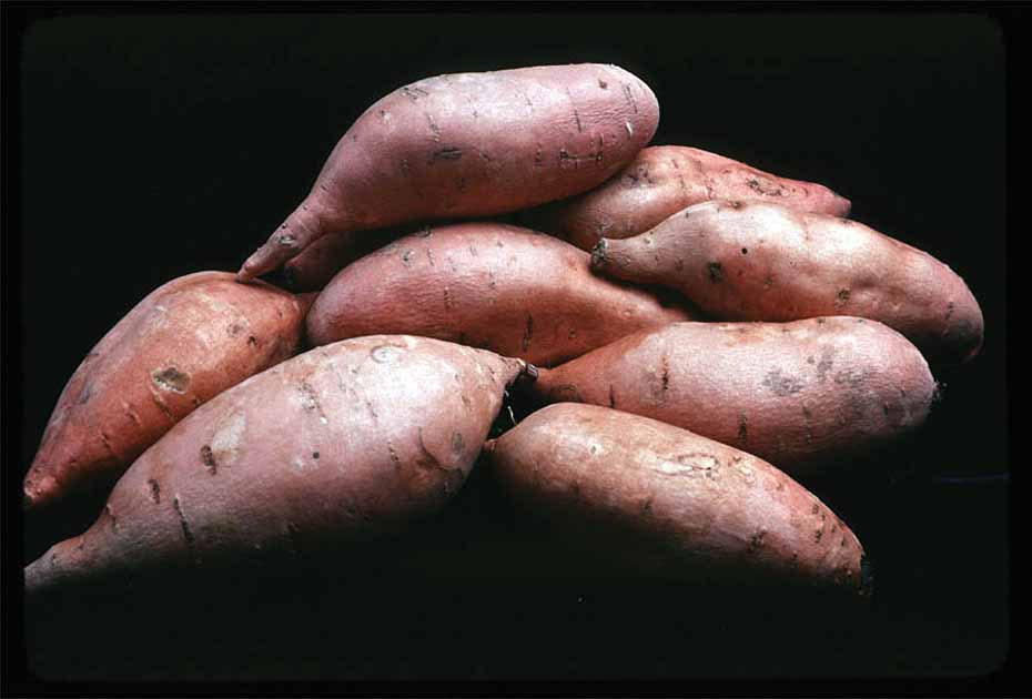 Effect of Herbicide Regimes on Weed Density and Yield in Sweet Potato