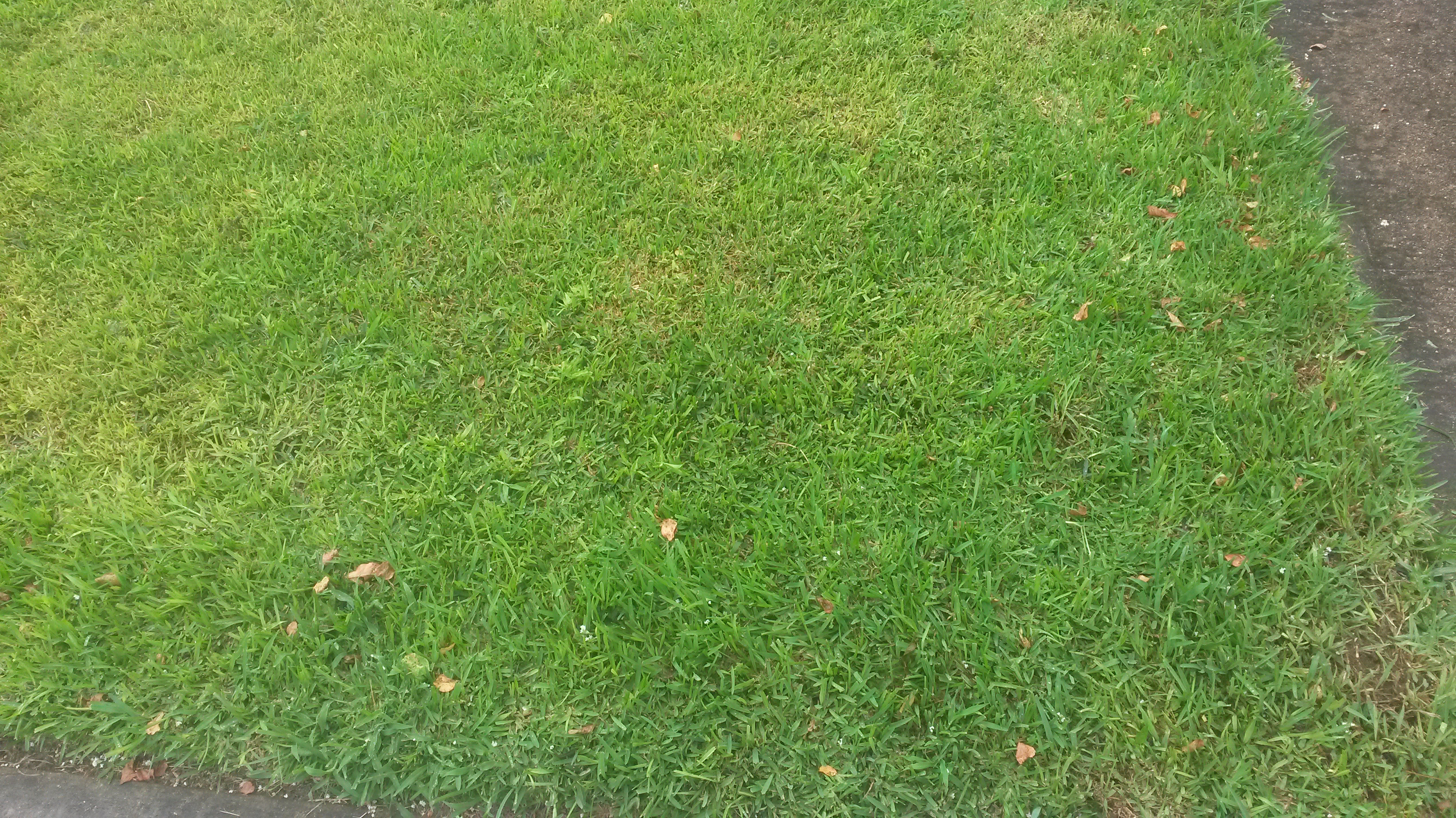 Picture of lawn