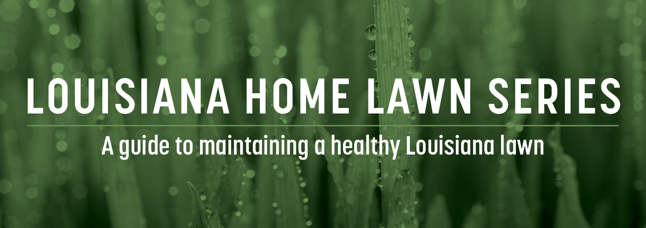 Louisiana Home Lawn Series: A guide to maintaining a healthy Louisiana lawn header.