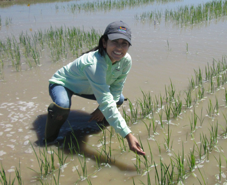 Plant Resistance As a Fundamental Component of Pest Management in Louisiana Rice