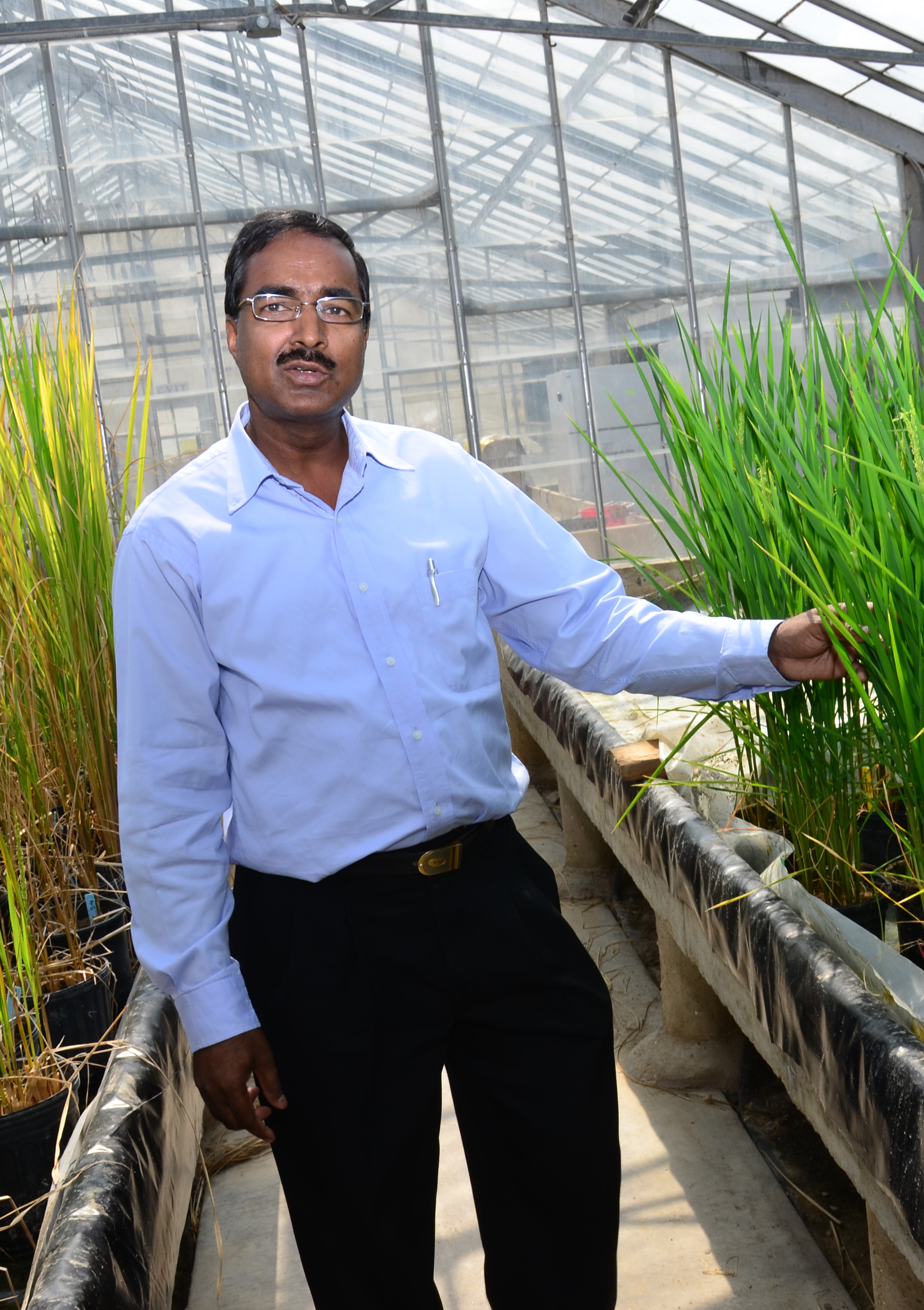 Scientist wins $450,000 grant to study rice drought tolerance