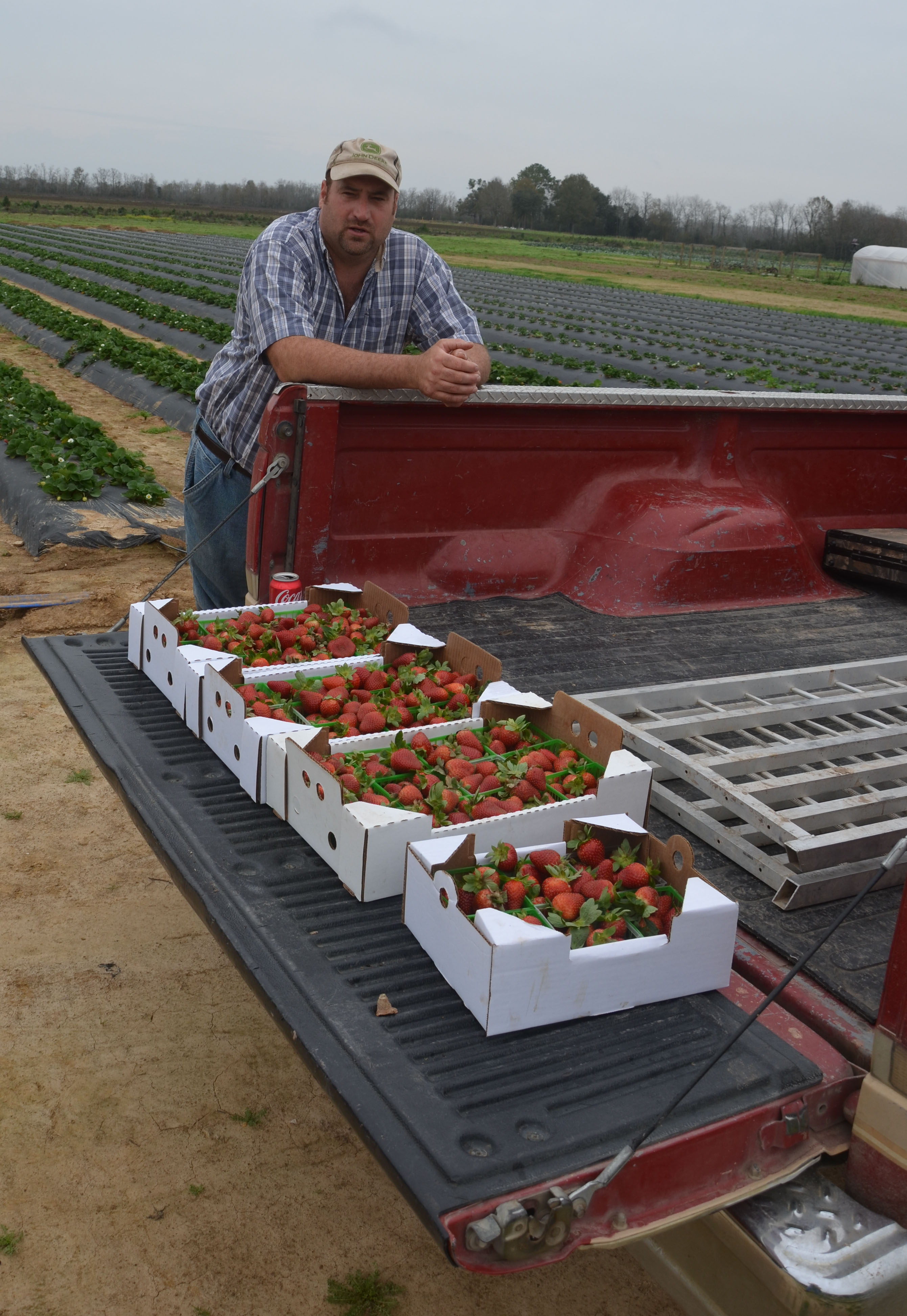 strawberries in truck