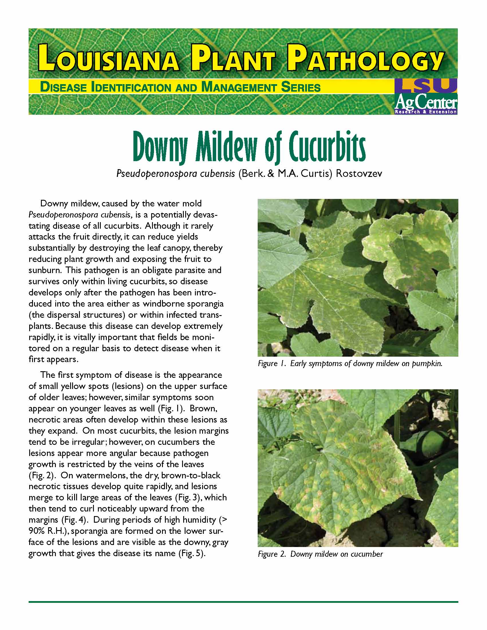 Louisiana Plant Pathology:  Downy Mildew on Cucurbits