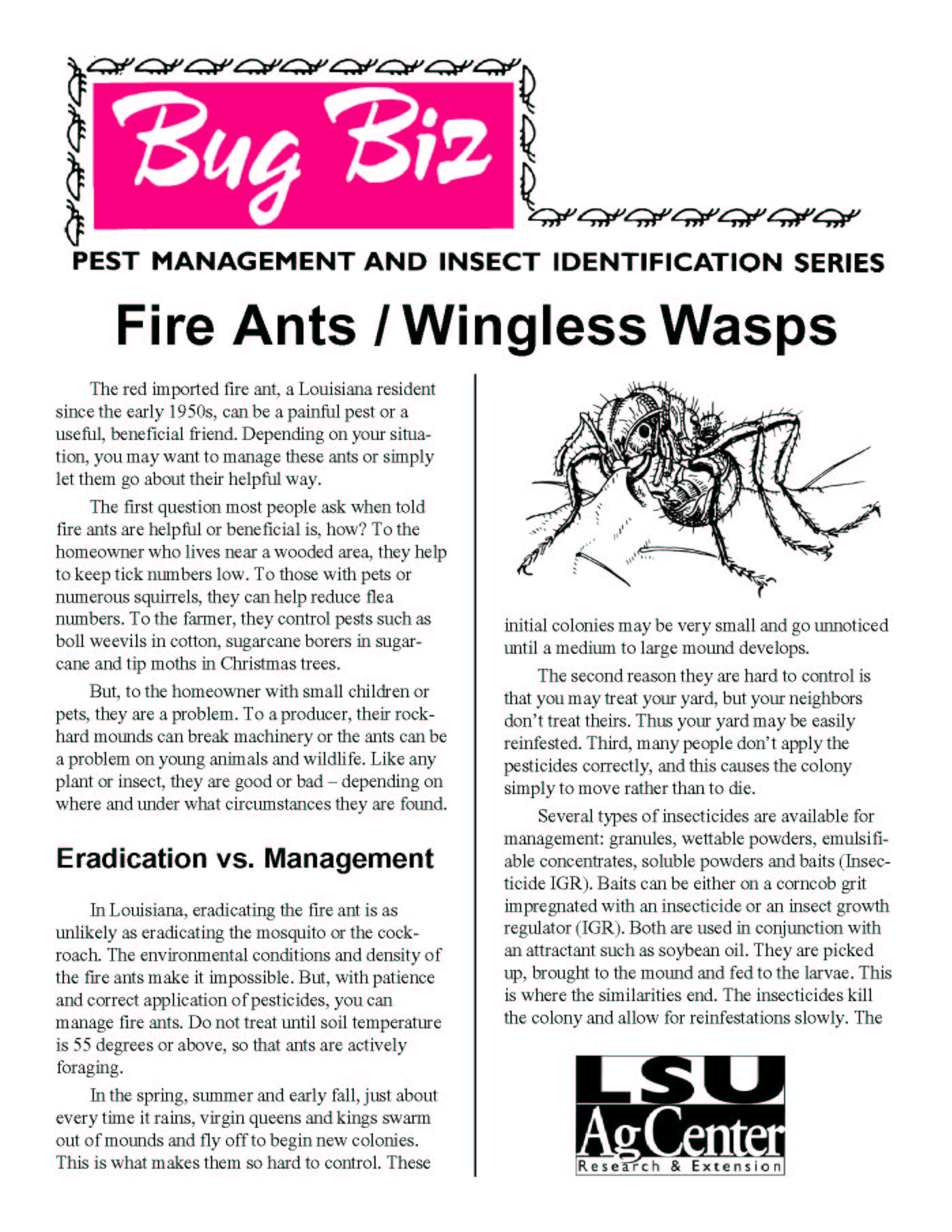 Bug Biz:  Fire Ants