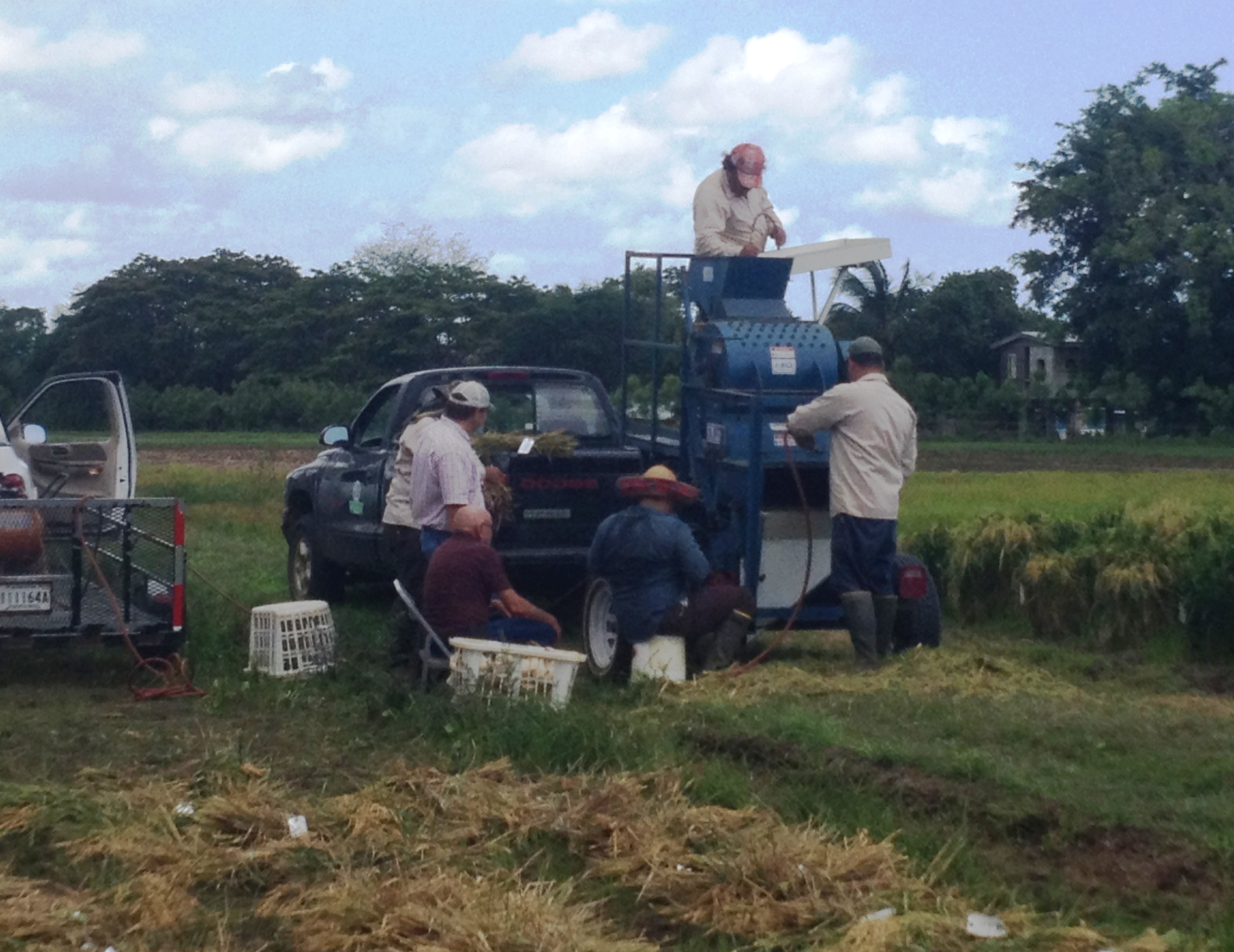 Puerto Rico Critical to Rice Research Efforts