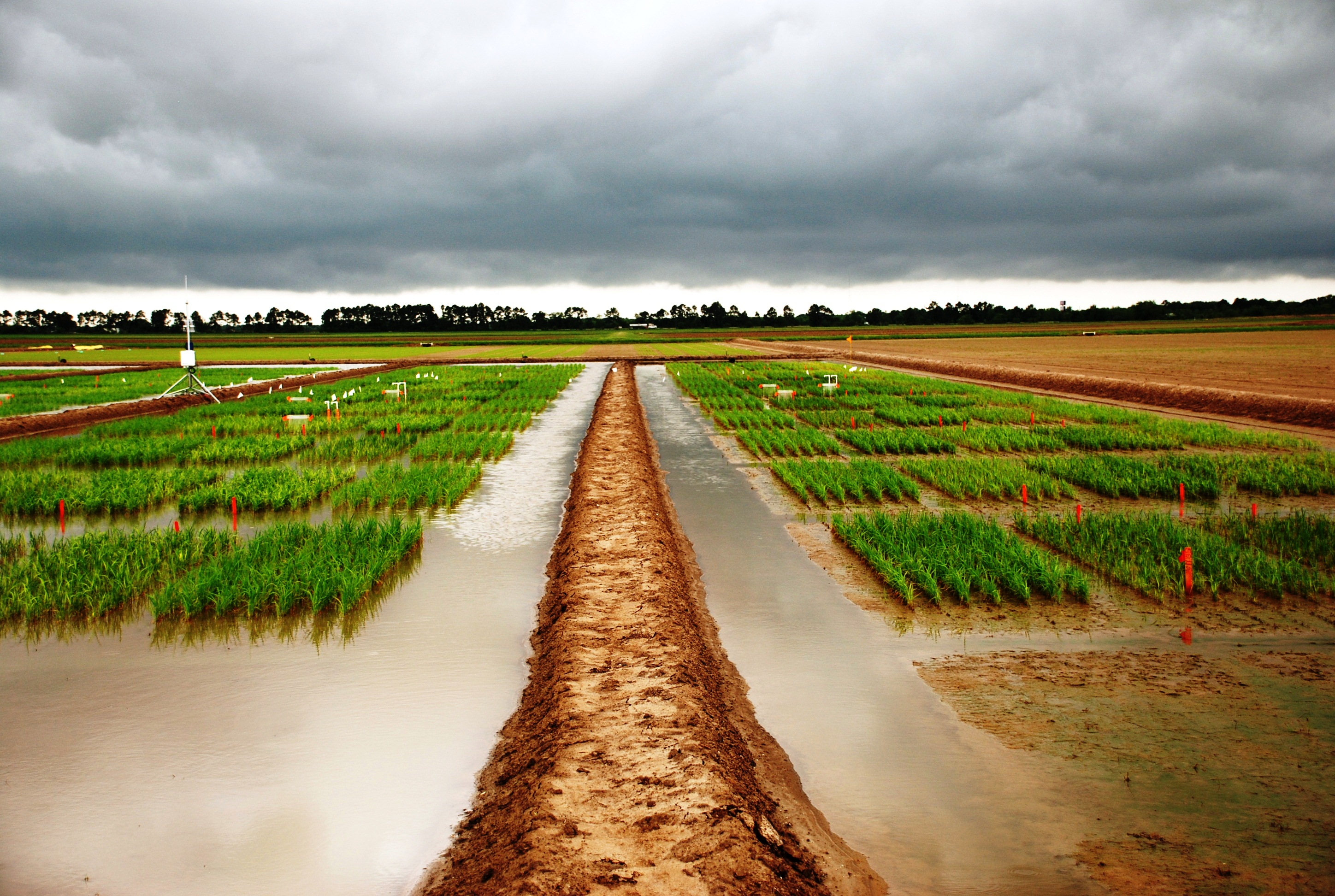 Rice Researchers Must Respond to Emerging Issues