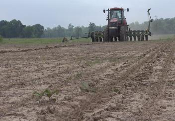 Wet weather slows Louisiana soybean crop