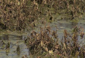 Difficult year for Louisiana agriculture