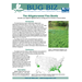 Bug Biz: The Alligatorweed Flea Beetle
