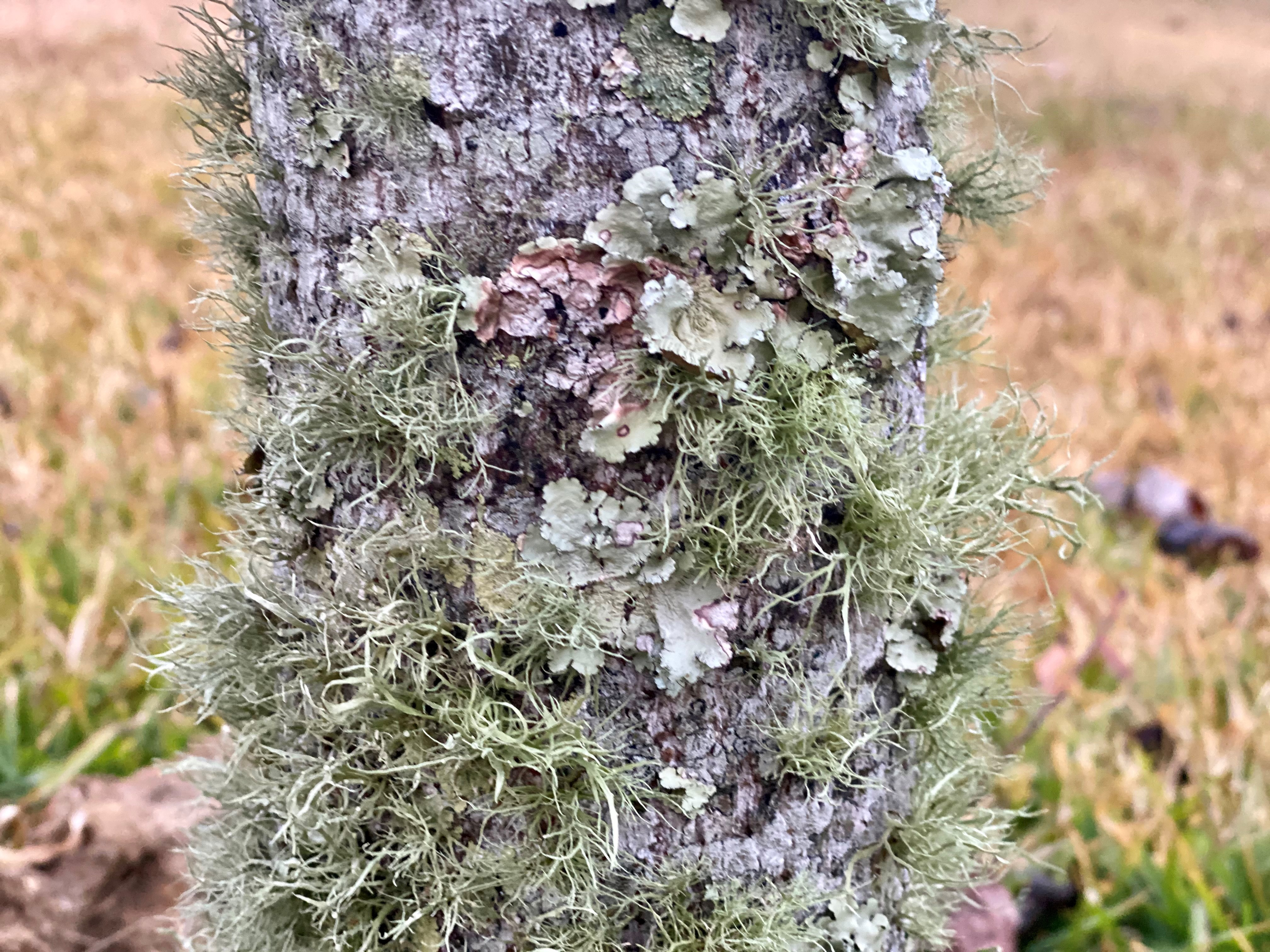 Lichens come in three different forms.