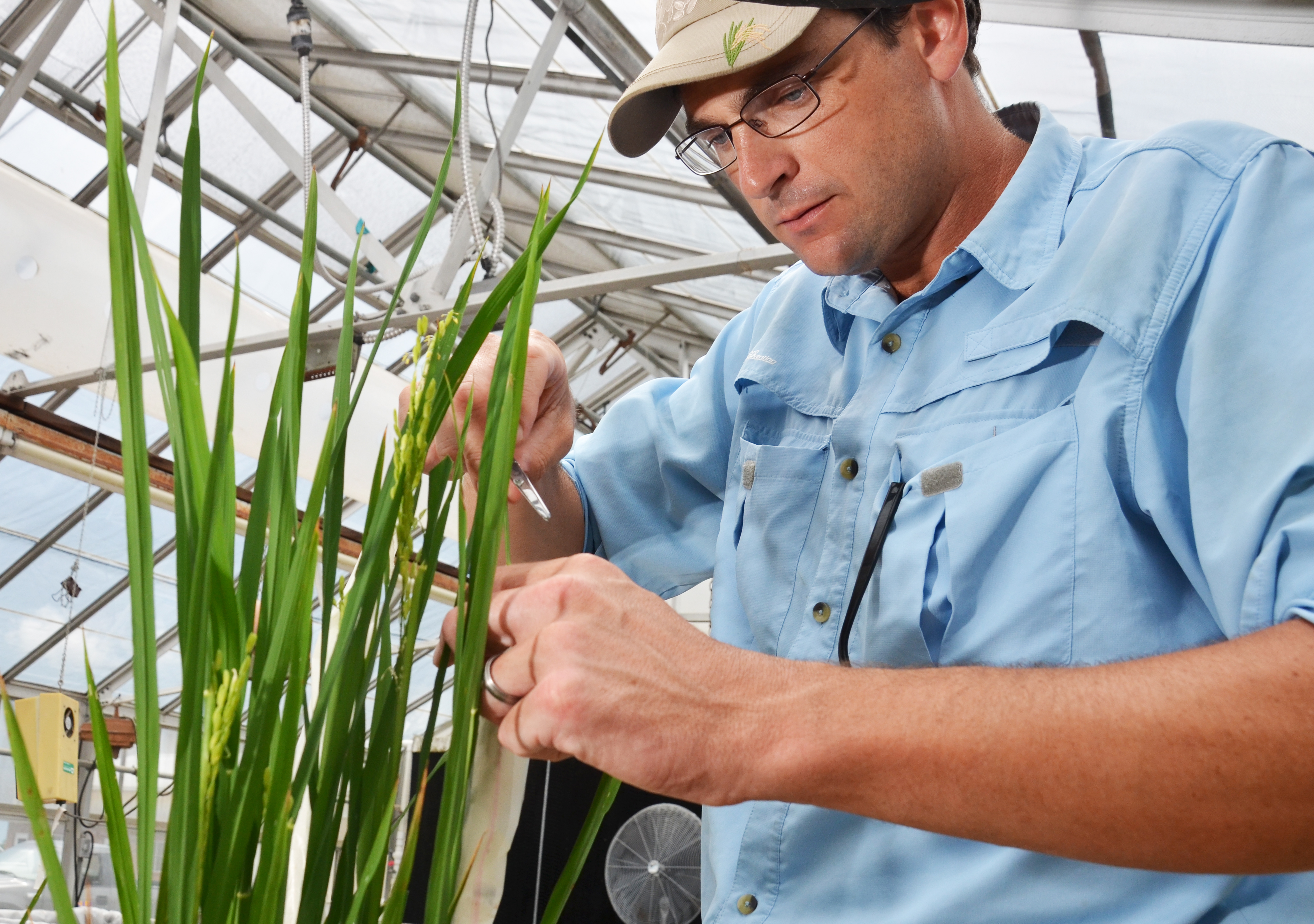 Meet new rice breeder, Adam Famoso