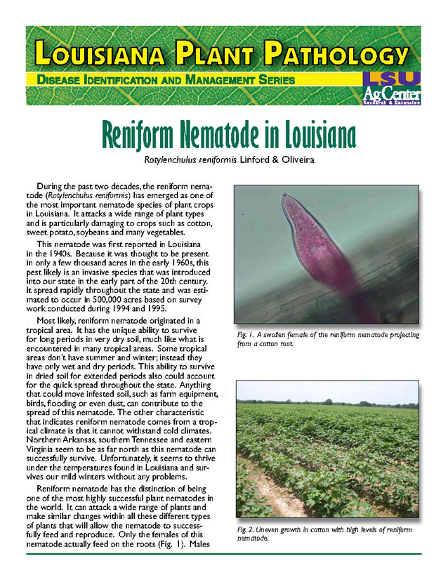 Louisiana Plant Pathology:  Reniform Nematode